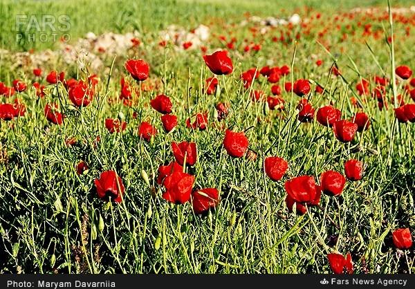 khorasan-shomali-yoursafecity-org (1)