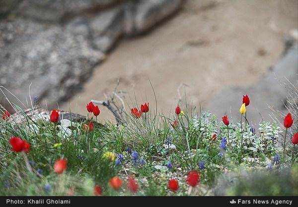 قلعه علی بیگ (10)